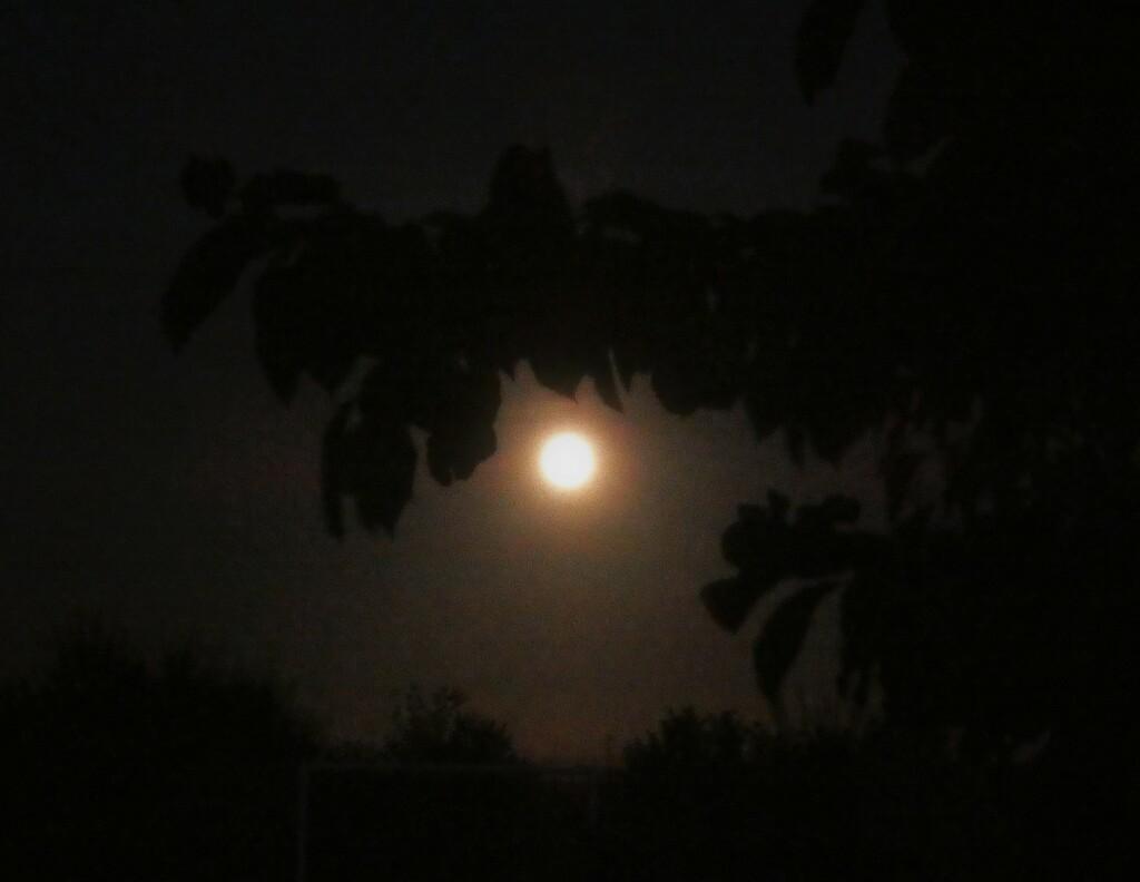Moon by julienne1