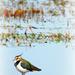 waterbird? by gijsje
