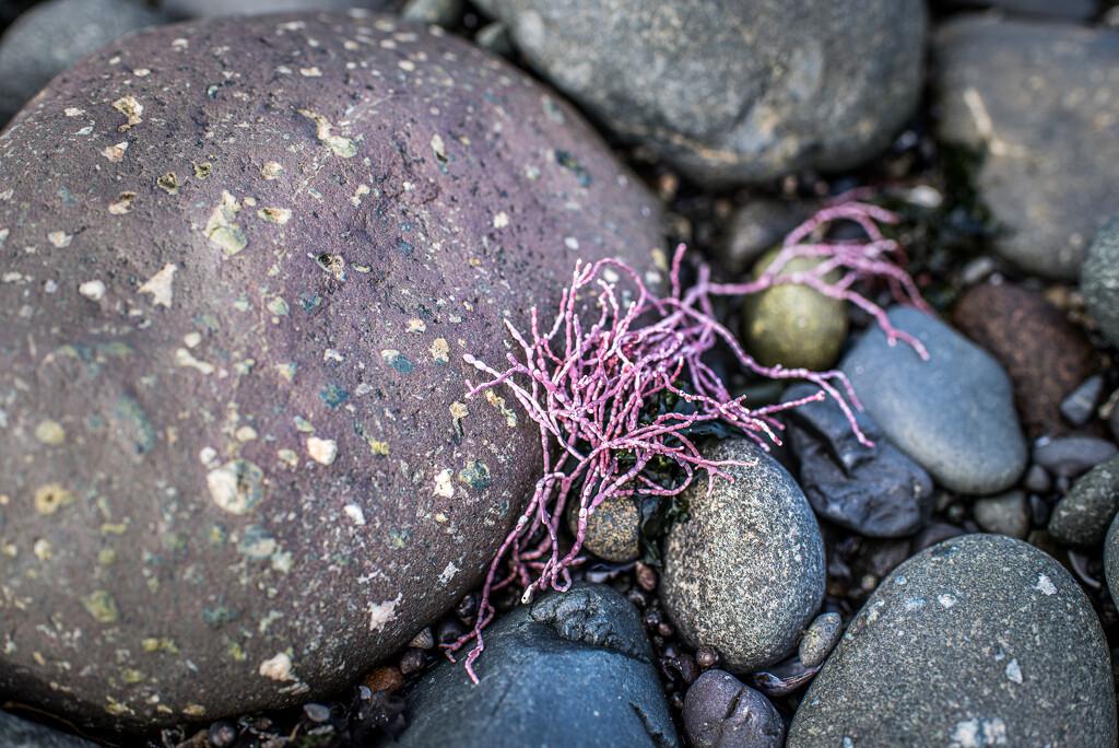 Beach Art by kwind