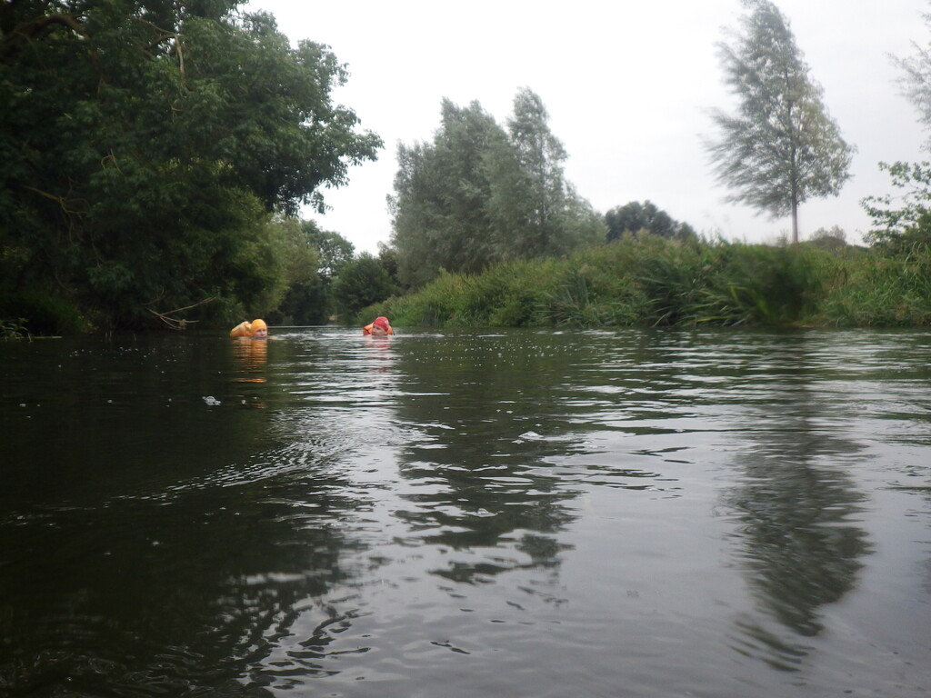 River Chelmer by bulldog