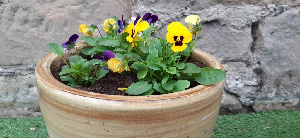 Happy plants  by sarah19