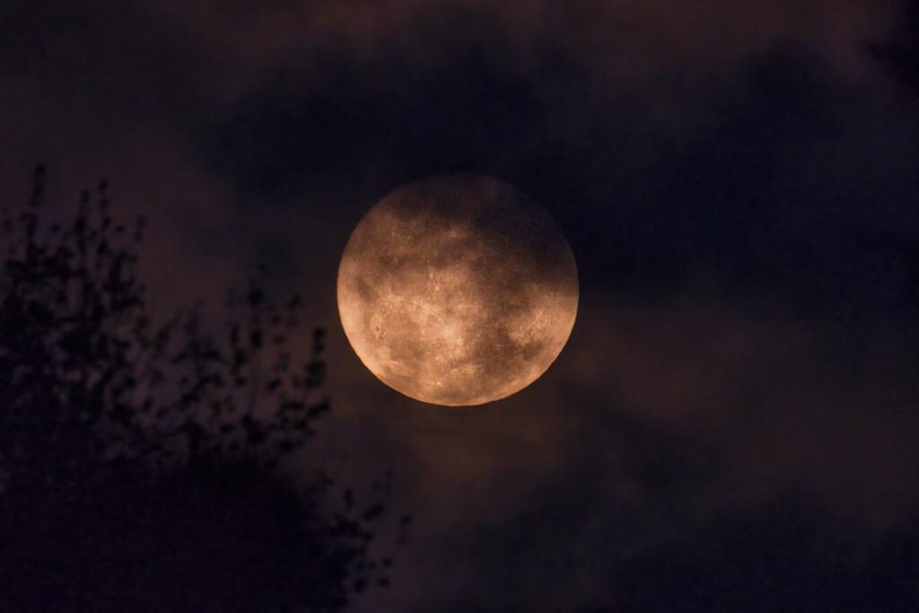 Moon by dkbarnett