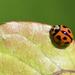 Is It A Bug On A Bug? DSC_7832