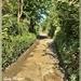 Walking through the Lanes