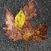 Imminent Autumn II
