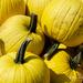Yep .....YELLOW pumpkins!
