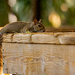 Relaxed Squirrel!