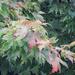 Sam's fall tree