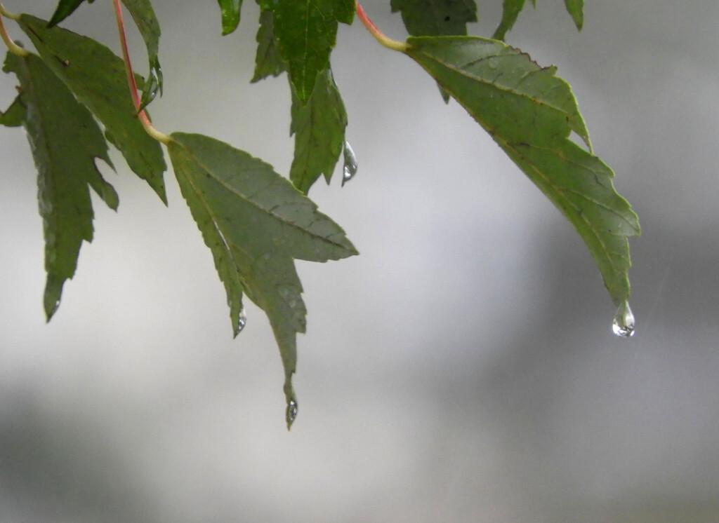 Raindrop by homeschoolmom