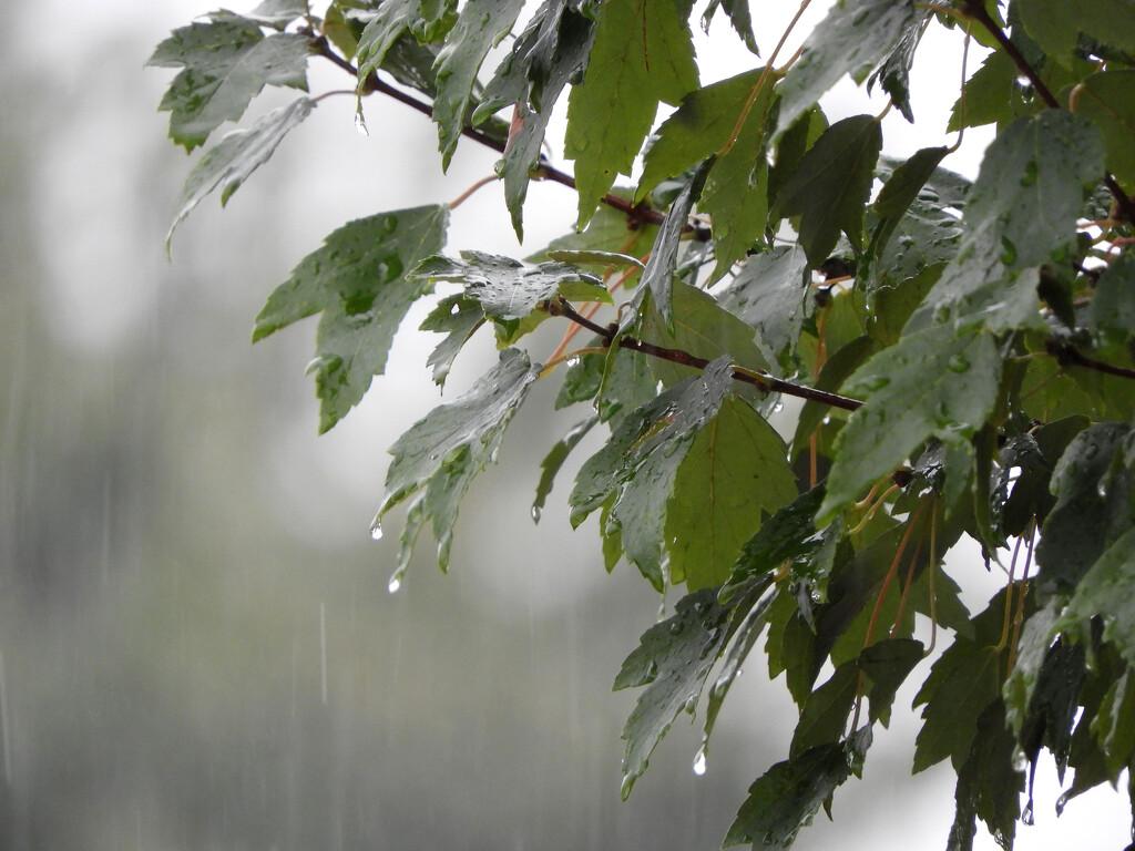 Rainy day by homeschoolmom
