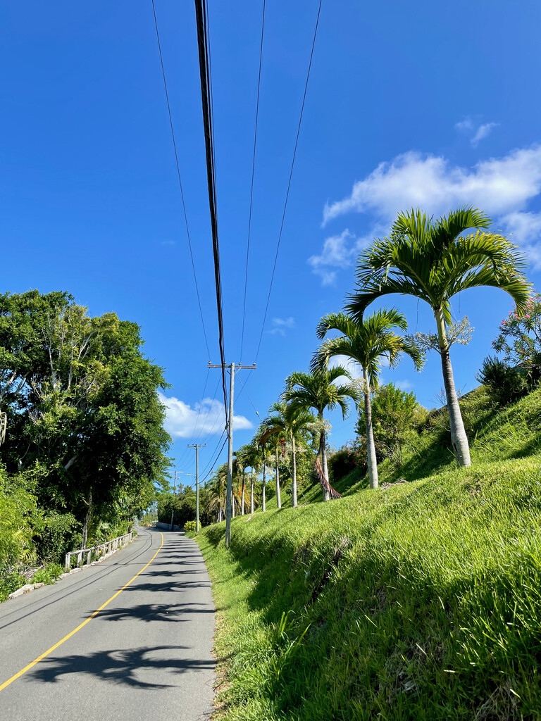 Palm tree shadows by lisasavill