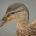 In a Duck's Eye by gardencat