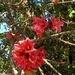 Beautiful Blossoms ~