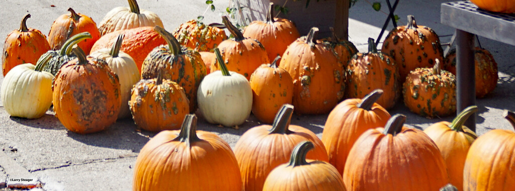 Closeup of pumpkins at the country store by larrysphotos