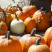 Closeup of pumpkins at the country store