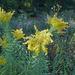 Wildflowers in a Prairie preserve