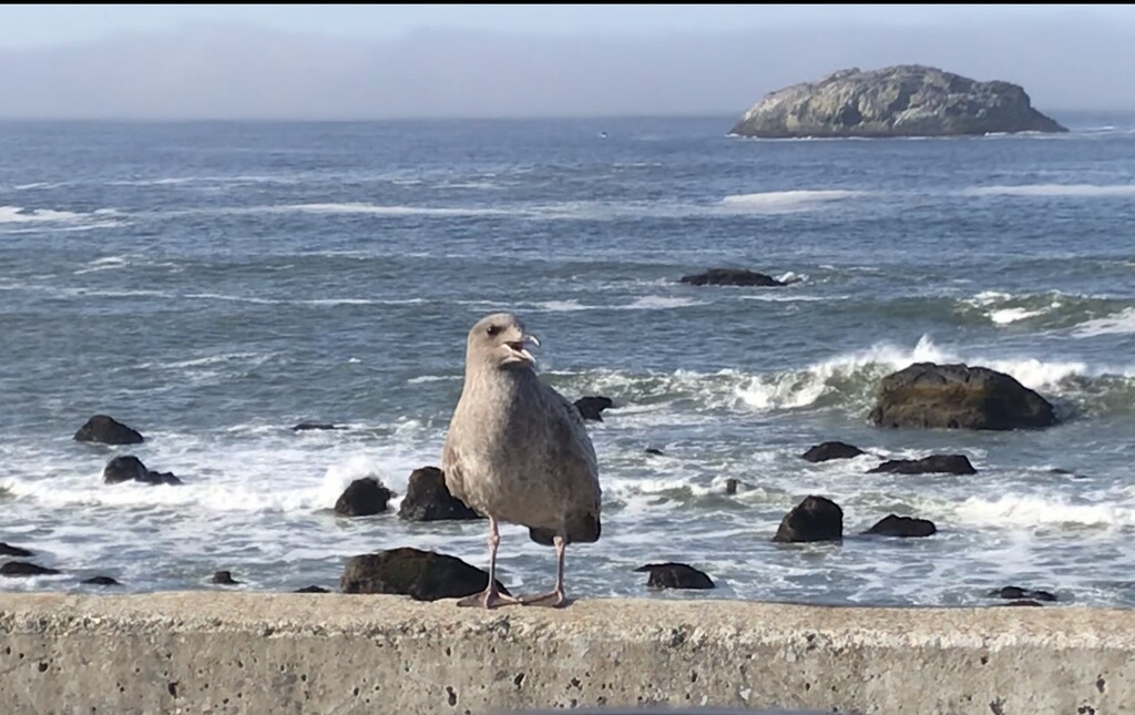 Baby gull  by pandorasecho