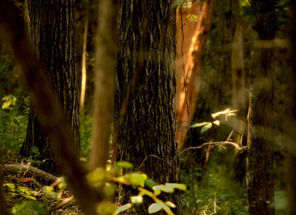 light in the forest by francoise