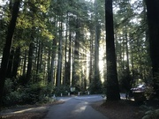 21st Sep 2021 - Redwoods