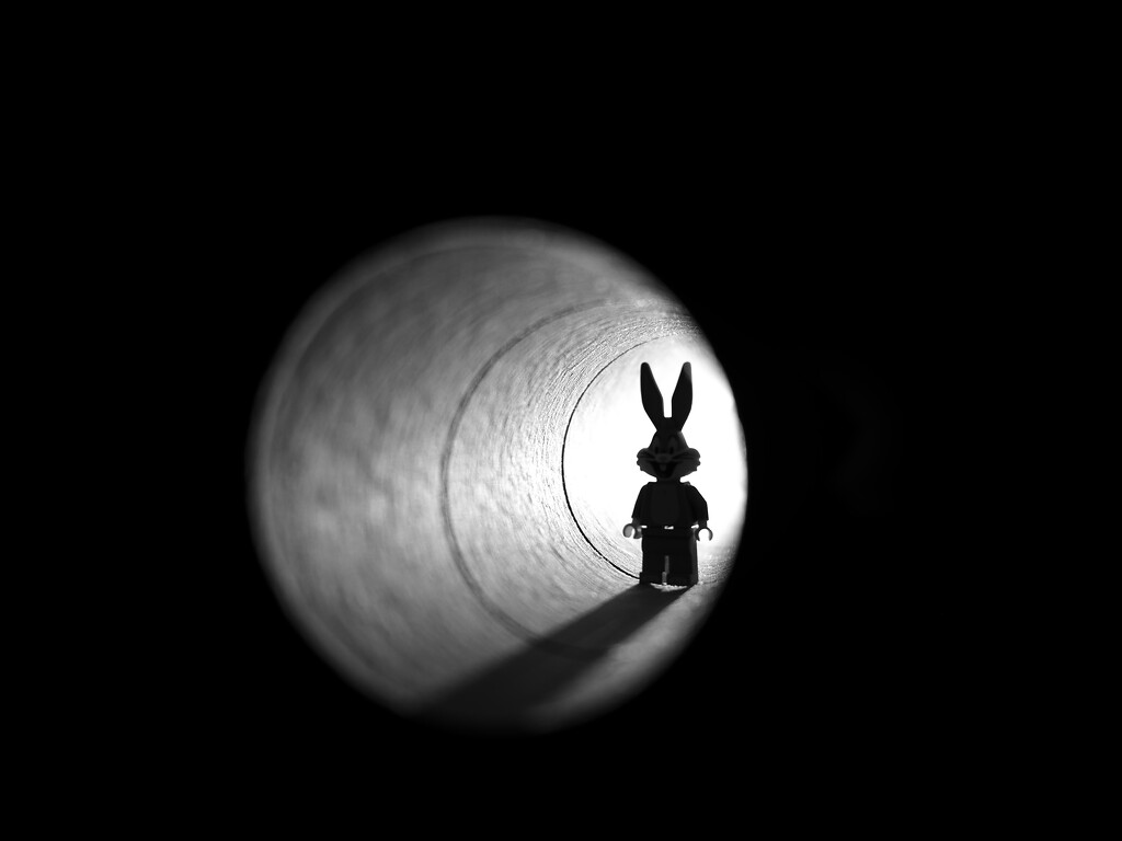 have i mentioned the rabbit hole lately? by northy
