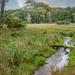 A Very Marshy Marsh