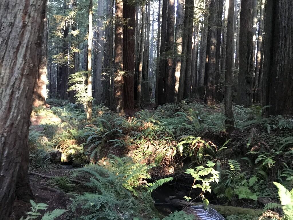 Florence Keller Redwoods by pandorasecho