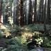 Florence Keller Redwoods