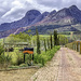 Where the Nguni cattle live