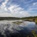 Balsam Lake Wetlands