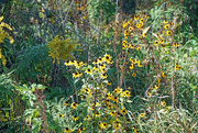 23rd Sep 2021 - Prairie flowers