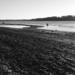 Riverbank - NF-SOOC