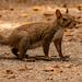 Curious Squirrel!