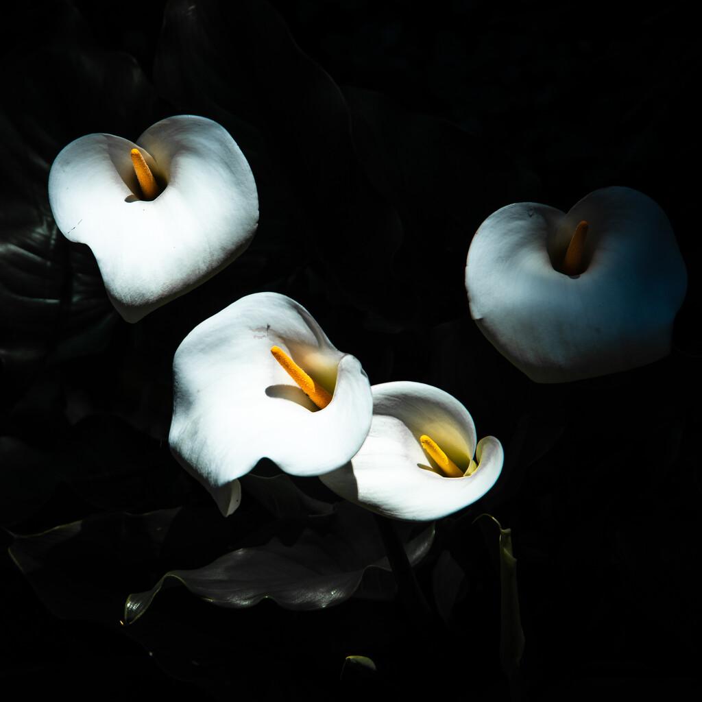 Quartet by yaorenliu