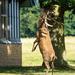 Deer Ballet