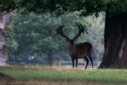 6th Sep 2021 - DIY deer