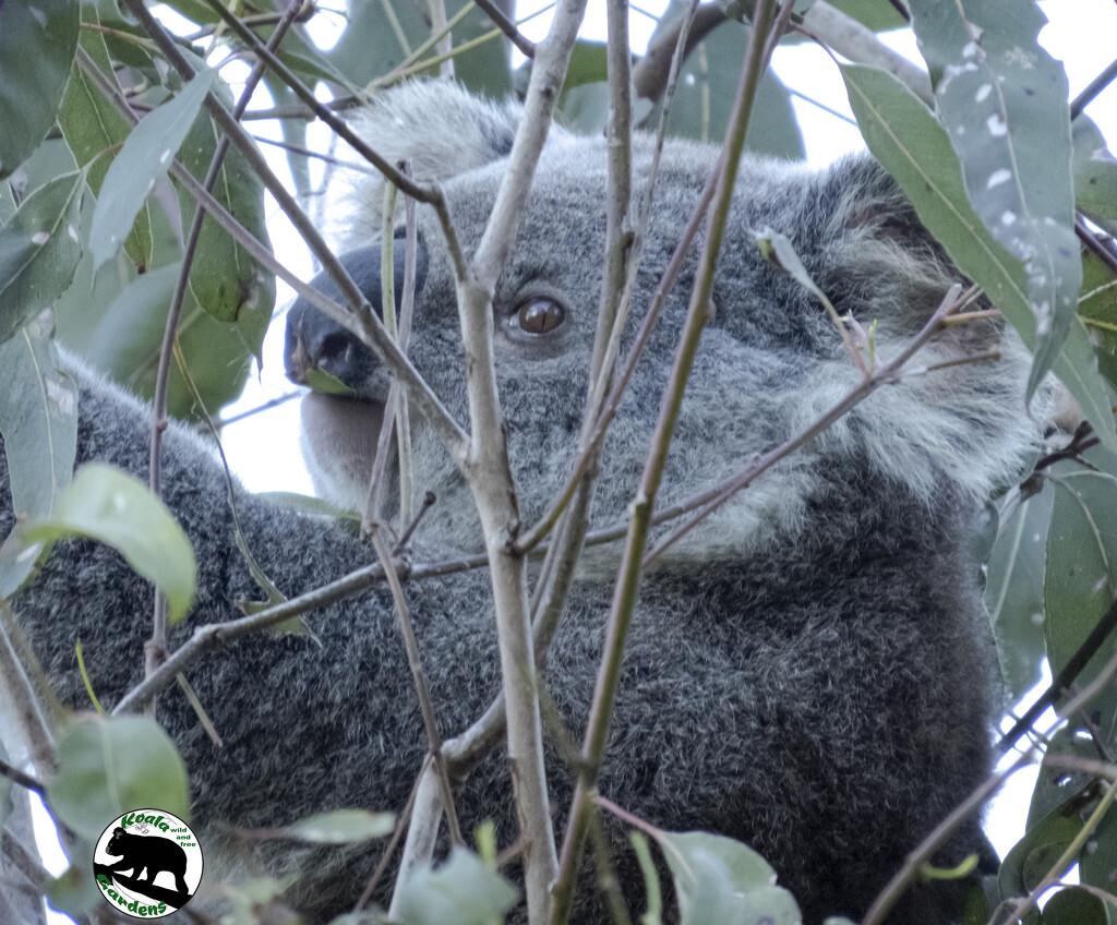 I spy with my little eye ... by koalagardens