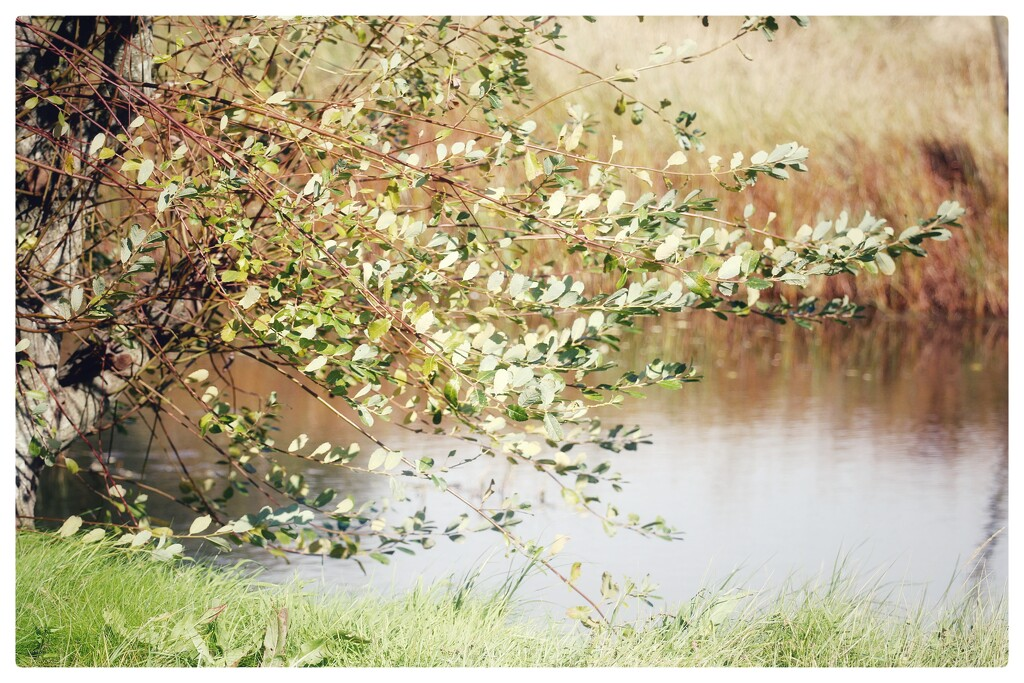 Wind In The Willows by motherjane