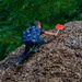 Climbing a mountain of wood chips