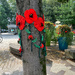 Poppies on a tree.