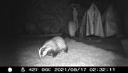 25th Sep 2021 - Mr Badger