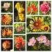 Late September Garden Snapshot