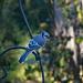 Blue Jay breakfast time
