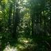 September Sunshine in a Pennsylvania Forest