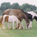 Formation grazing