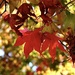 Fall is in the air by yoland