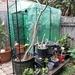 Bigger Greenhouse