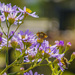 Aster Visitors by k9photo