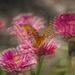 Flutter by kvphoto