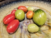 27th Sep 2021 - Tomatoes from a Friend