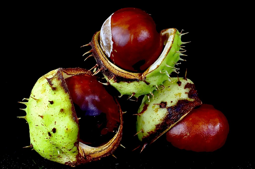 Conkers by carole_sandford